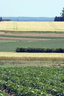 St-Marc - paysage agricole route de Perwez