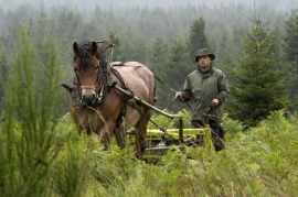 Travaux forestiers avec chevaux de trait.