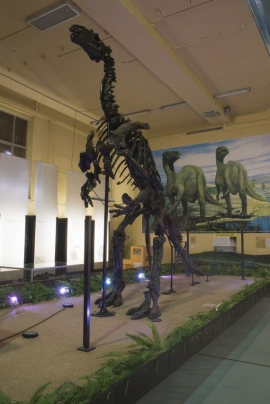 Musée des iguanodons à Bernissart