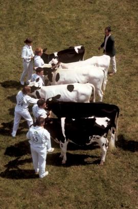 Foire agricolede Libramont