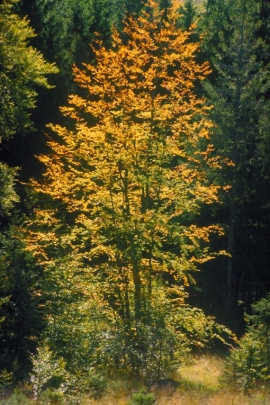 Forêt wallonne.