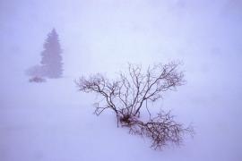 Fagnes, paysage enneigé.