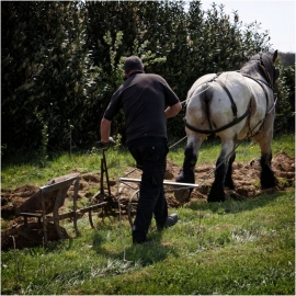 Agriculture traditionnelle. Cheval de trait.