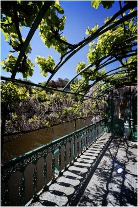 Namur. Terrasseaux glycinesen bord de Sambre,quartier des Brasseurs.