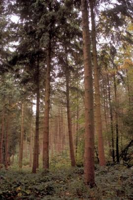 Le Département de la Nature et des Forêts met en oeuvre le code forestier, les lois sur la conservation de la nature, sur les parcs naturels, sur la chasse et sur la pêche en concertation avec les milieux concernés.