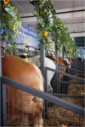 Foire agricole de Libramont. 2017.