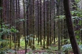 Démonstration forestière. Bertrix.
