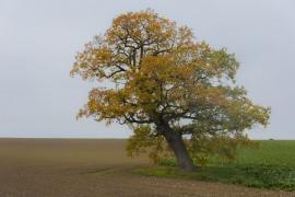 Arbre en automne à Perwez.