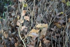 Journée de l'arbre 2017 sur le thème de la viorne (viburnum, famille des Adoxacées) lancée par le Service public de Wallonie (SPW). Distribution d'arbres au parc des Récollets à Huy par l'administration communale et le SPW.