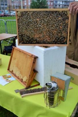 Journée de l'arbre 2017 sur le thème de la viorne (viburnum, famille des Adoxacées) lancée par le Service public de Wallonie (SPW). Distribution d'arbres au parc des Récollets à Huy par l'administration communale et le SPW. Stand d'un apiculteur, montrant l'intérieur d'une ruche (fabrication du miel par les abeilles).