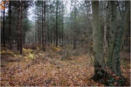 Sous-bois en automne à Malonne (Namur).