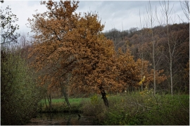 Paysage d'automne à Jemeppe-sur-Sambre.