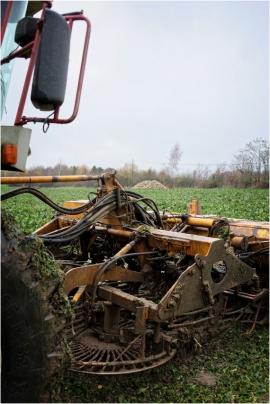 Récolte de betteraves sucrières à Leuze (Eghezée).