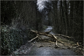 Arbre mort tombé sur une route.