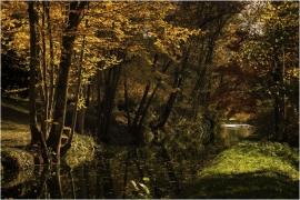 Arboretum Robert Lenoir à Rendeux